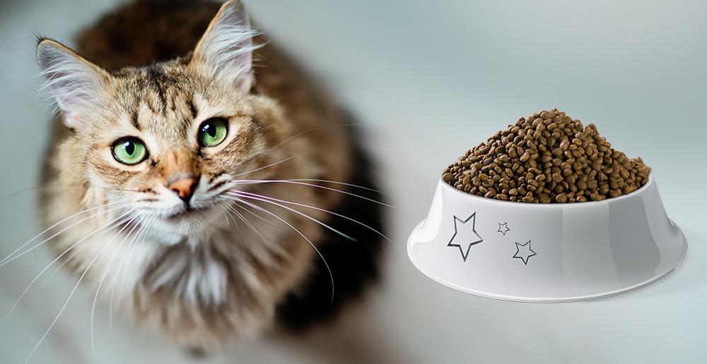 Granule pre mačky